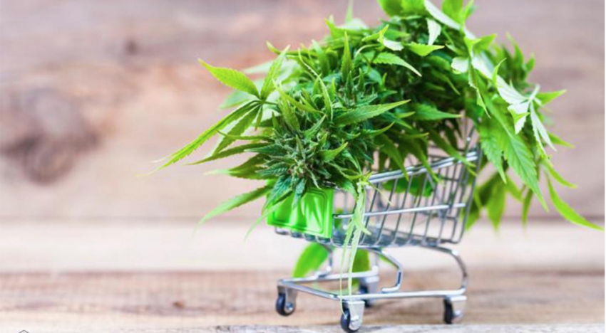 An Important Guide to Choosing the Best CBD Products in the Market
