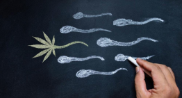 Men That Smoke Cannabis Have a Higher Sperm Count?