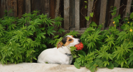 The Right Way to Introduce CBD to Your Pets
