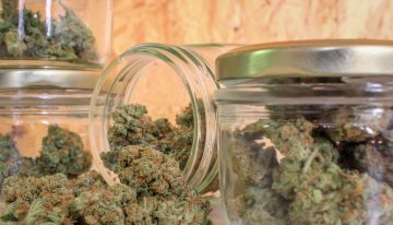 How to Choose the Right Type of Marijuana for You