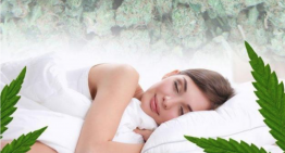 The Best Cannabis Strains for Sleep Support