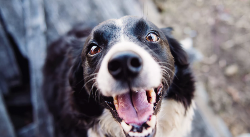 The Benefits of Using CBD Oil on Your Pets