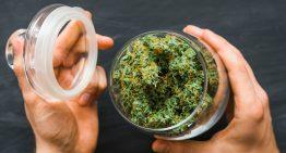 7 Ways to Keep Marijuana Fresh for Longer