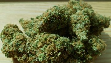Weed vs Hashish: Which is Better for Recreational Use?